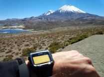At 4632m - view to the twin Volcans Parinacota (6342 m) and Pomerape (6232 m) in the background