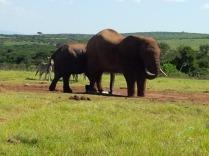 Elefanten gibt es hier wirklich viel