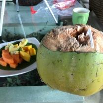 Kokosnuss direkt vom Baum