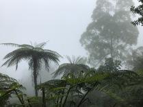 Im Regenwald war es der nebellig
