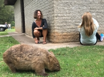 Die Wombats kamen auf einem Zeltplatz abends sehr nahe heran