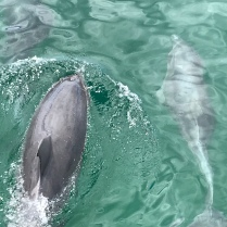 They swam right close to us