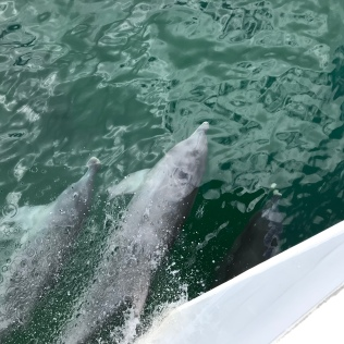 Wild dolphines - we saw them almost daily in the sea