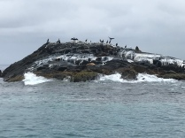 Snorkelling with the seals at the coast of Montague Island amazing how wild and still trustful