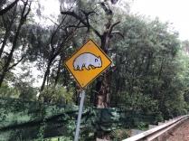 Achtung Wombats - und davon gab es dann auch genug